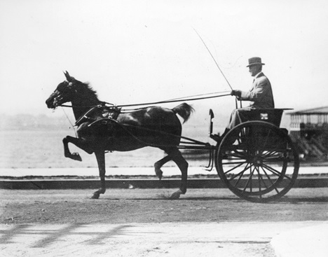 """S.L. Howe in his """"Tilbury Gig"""" driving along Beach Avenue, 1910, Vancouver City Archives, Port P608 - A Sunday Drive at English Bay; http://searcharchives.vancouver.ca/index.php/sunday-drive-at-english-bay."""
