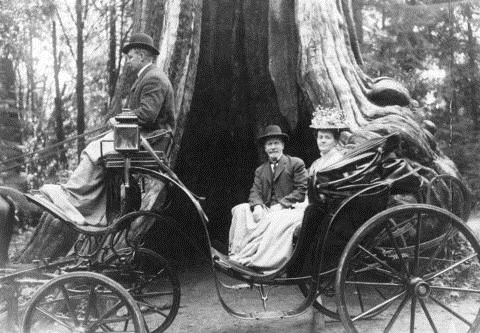 John Henry Cocking driving a phaeton (carriage) in front of the Hollow Tree, 1907, Vancouver City Archives, AM54-S4-: St Pk P239, http://searcharchives.vancouver.ca/index.php/phaeton-carriage-driven-by-john-henry-cocking-in-front-of-hollow-tree.
