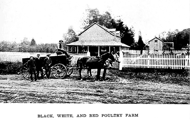 """Black, White, and Red Poultry Farm,"" British Columbia, Its History, People, Commerce, Industries and Resources, compiled by Henry J. Boam, edited by Ashley G. Brown; London, England, Sells Limited, 1912, pages 281-282; https://archive.org/stream/britishcolumbiai00boam#page/281/mode/1up; https://archive.org/stream/britishcolumbiai00boam#page/282/mode/1up."