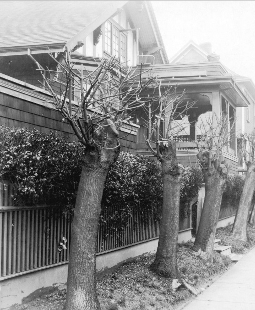 Denman Street (between Nelson and Comox), 1925, detail; Vancouver City Archives, CVA 357-15; https://searcharchives.vancouver.ca/nst-5622.